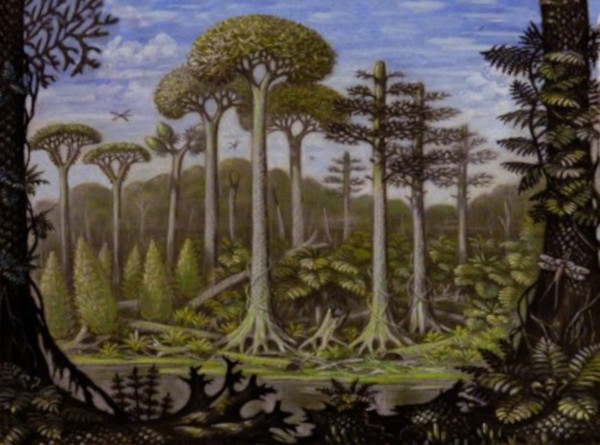 археология, окаменелости, лес, Китай