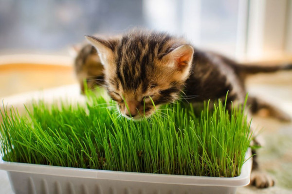 animals, pets, cats, grass