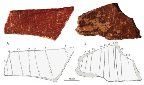 палеонтология, рисунки, ученые, Китай