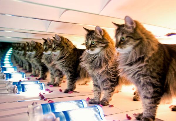 кот, клон, ученые, Китай