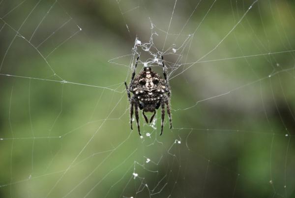 биология. ученые, паук, паутина