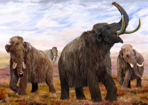 палеонтология, окаменелости, мамонт, Кайсери