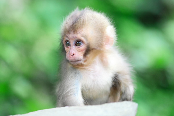 животные, обезьяны, туристы, путешествия