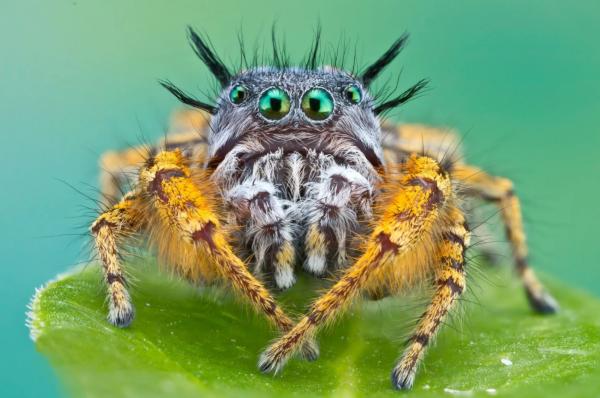 биология, животные, существа, пауки