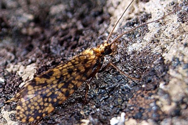 природа, бабочки, органы чувств