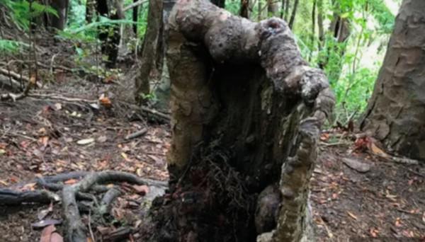 биология, пень, зомби, ученые, Новая Зеландия
