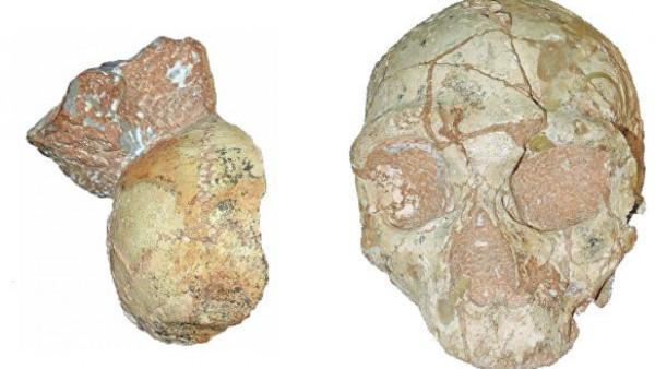 археология, ученые, Греция, Африка