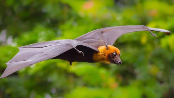 животные, летучие мыши, ученые, США