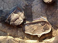 Новые невероятные археологические находки (продолжение)