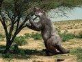 10 000 лет назад первобытные люди охотились на гигантских ленивцев