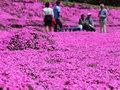 Розовое покрывало для слепой жены: он 20 лет сажал цветы во дворе