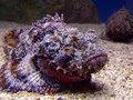 Морские существа, от которых лучше держаться подальше