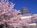 Такая странная и удивительная Япония: интересные факты