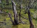 Монстры Луизианских болот